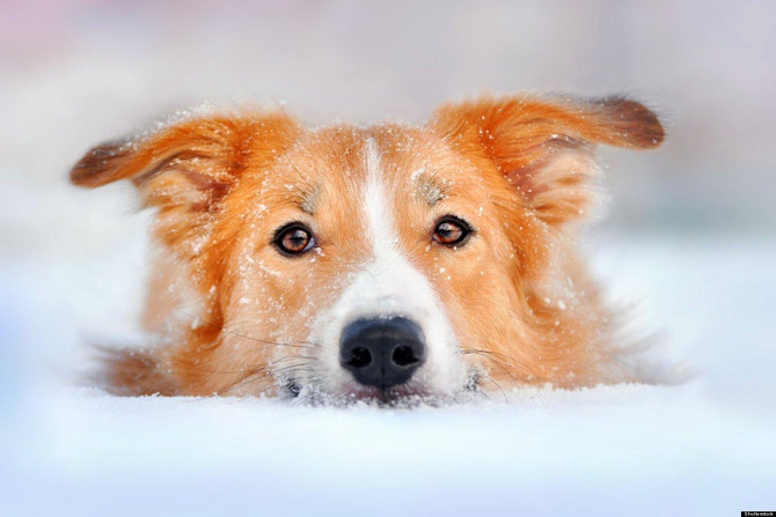 Boli cu care cainele tau se poate confrunta iarna!